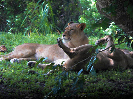 Resting Royalty.