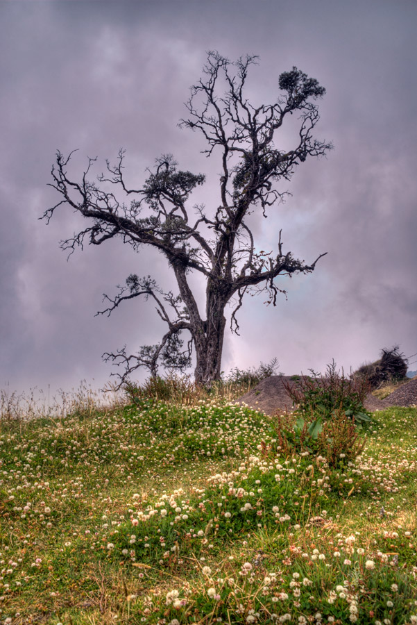 Tree near Irazu Volcano 3 by otas32