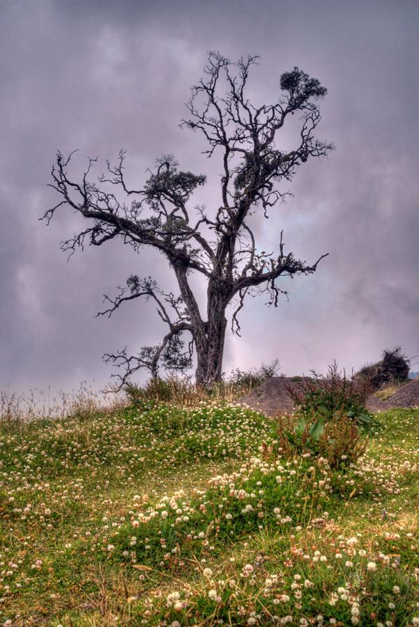 Tree near Irazu Volcano 3 by otas32