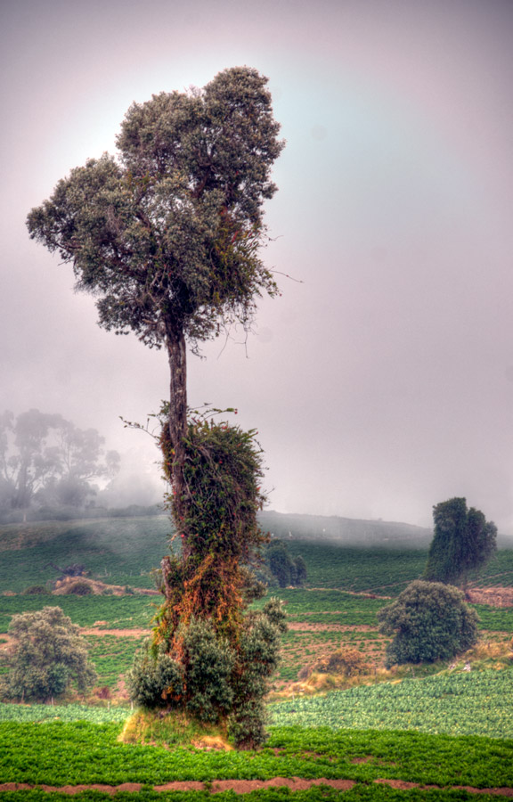Tree near Irazu Volcano 4 by otas32