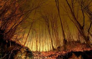 Trees by MaraDamian