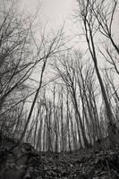 trees2 by MaraDamian