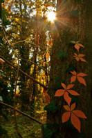 Late autumn2 by MaraDamian
