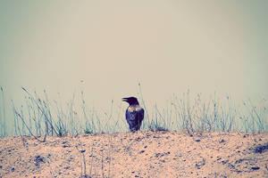 bird3 by MaraDamian