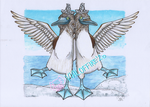 Bloo Footed Boobies by VialofFire