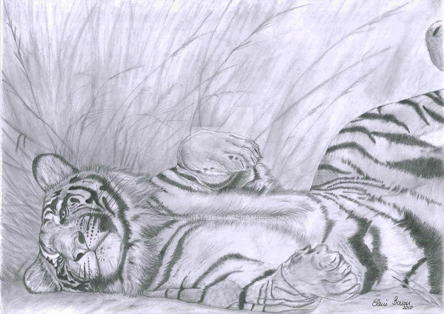 Tiger by Sondim