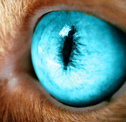Blue eyes by NebelSola