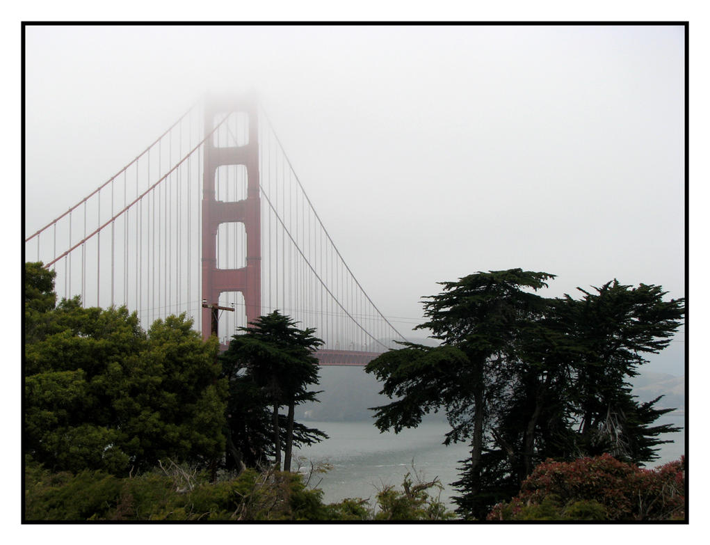 Foggy Day on the Bay by SurfGuy3