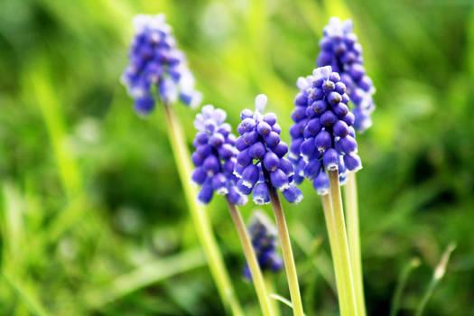 Remember Spring
