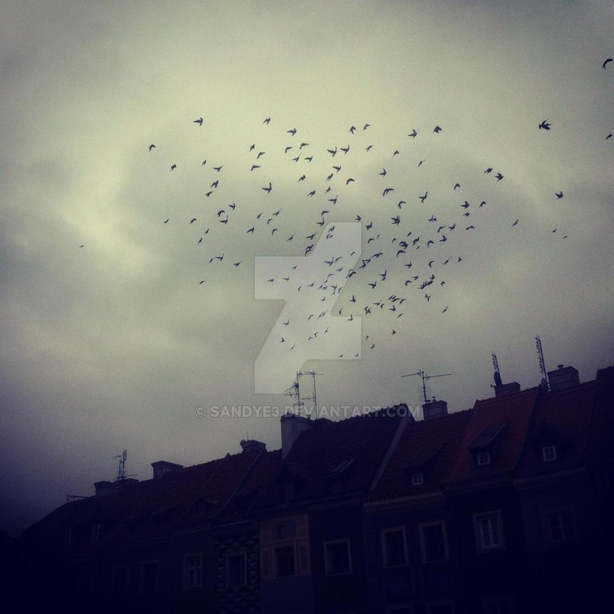 Birds Love. by sandye3
