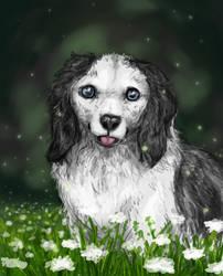Dog Portrait by strazi