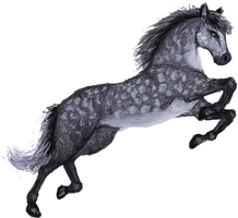 Dappled Horsey by strazi