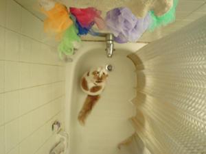 Cat by girlnotpretty
