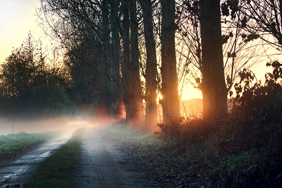 Misty evening by cs4pro