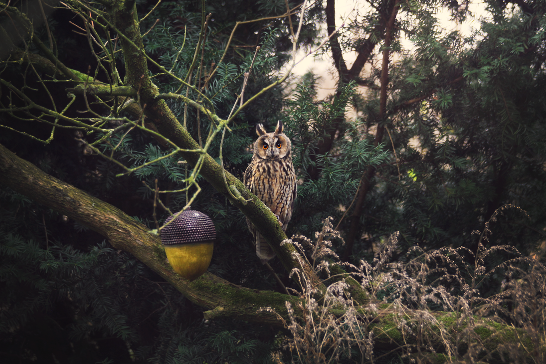 Eyes of the owl by cs4pro