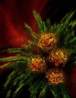 Flowers by Dr-Destruction