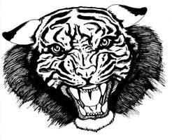 Tiger by Dr-Destruction