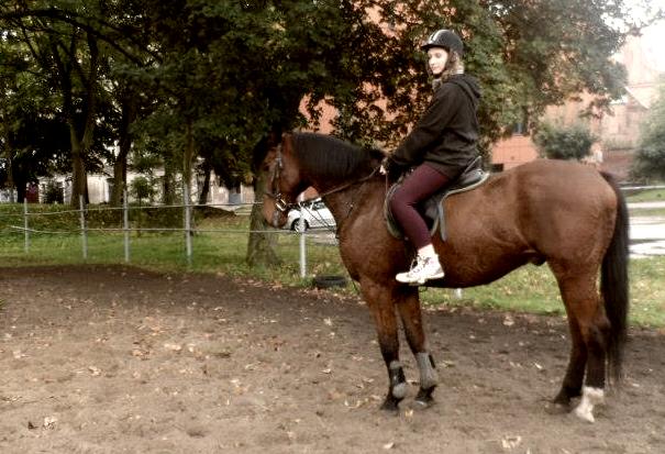 More horse-like ID by Ariana-Kio