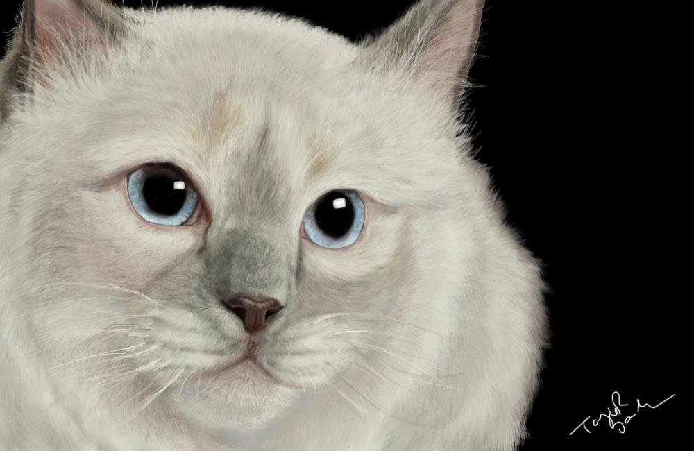 Kitty by grypwolf-fan