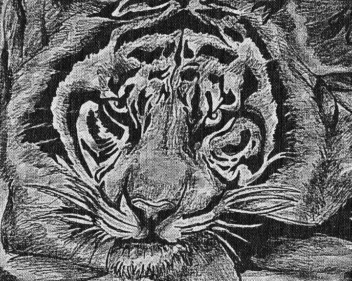 My first tiger by MEDC