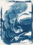 Cyanotype Final II