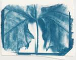 Cyanotype I