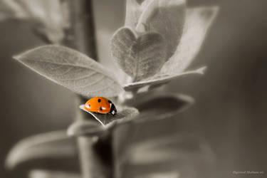 ladybyrd by jutul