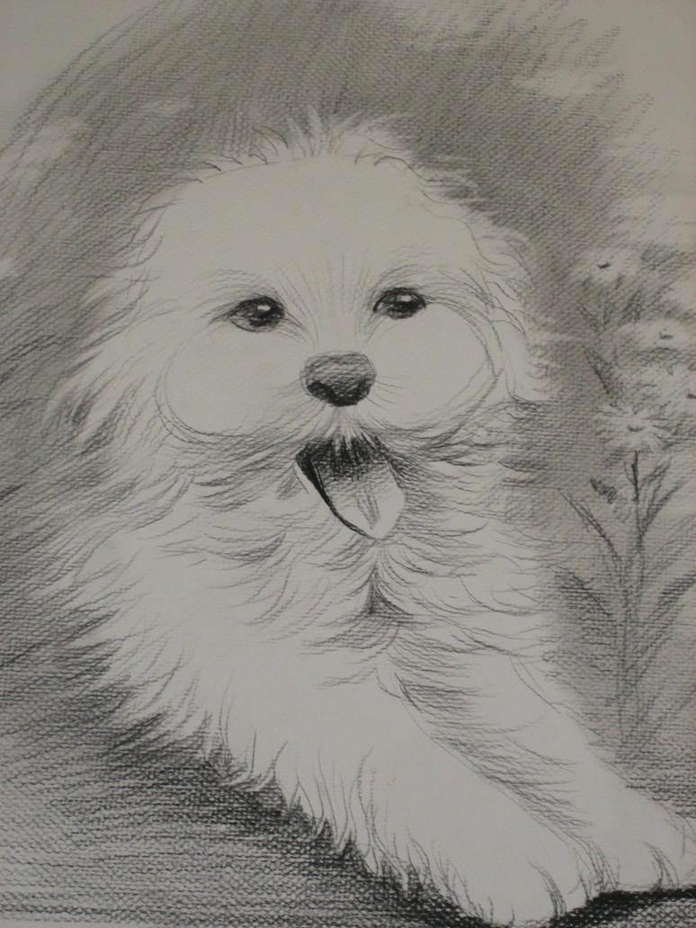 Dog by xXCynthiaSerenaXx