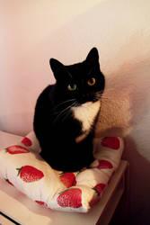 My cat Yuna by nyappy-aoi