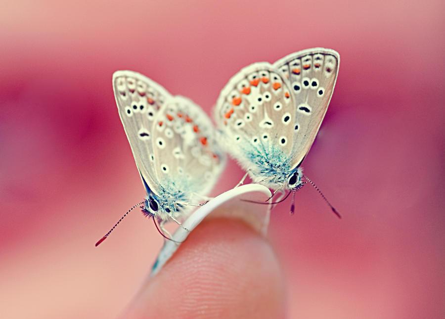 yayz butterflies by AsseveraVeta