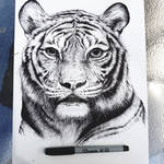 Tiger - SharpieArt by 03ketch03