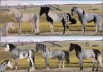 Auction horse adopt 2 [OPEN]