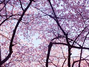 Enveloped in Spring's Beauty