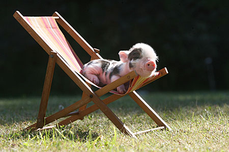 Sleeping-baby-pig by MMWoodcock