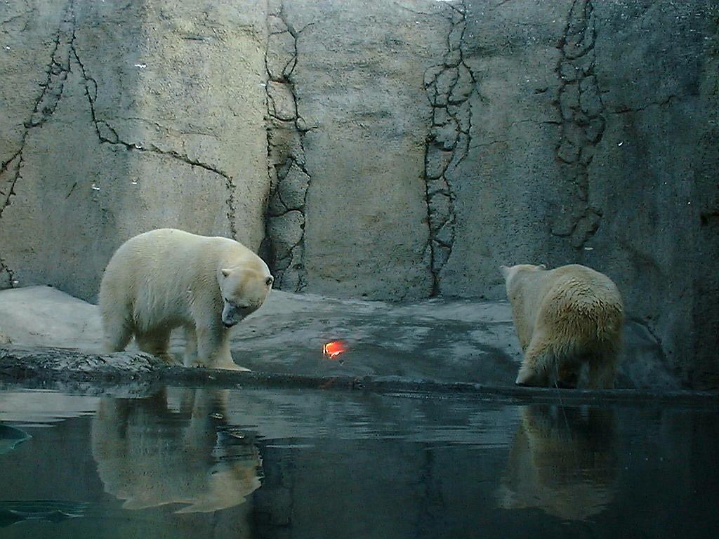 Polar Bears by CarolineTigeress