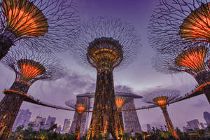 Supertrees by nuic