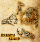 Dragon Scans
