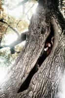 Green tree witch by GwendolinWidmann