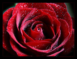Pure Red by LietingaDiena