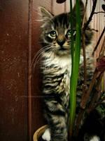 Hide-and-seek by LietingaDiena