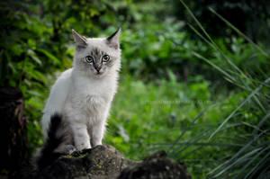 Little Hunter by LietingaDiena