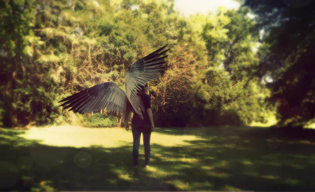 new wings #2 by sam13gidget
