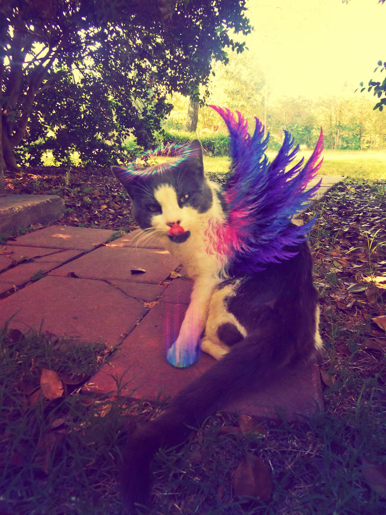 Paco the majestic kitty by sam13gidget