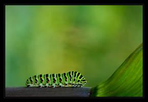 Panzerpillar by Neslepaks