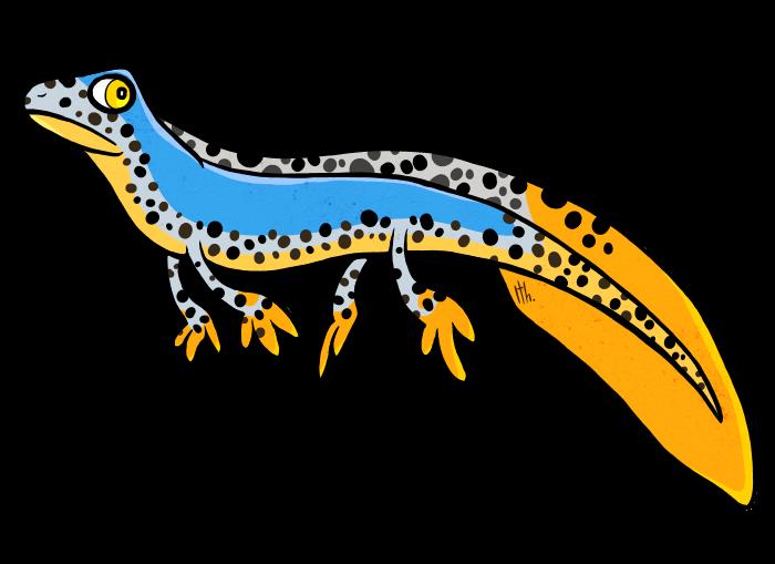 clipart newt - photo #24