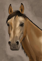 Horse Portrait by Ithlini