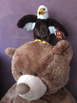 Baldnie standing on BB Bears head