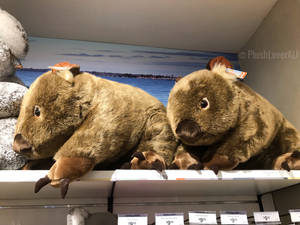 Giant Minikplush Wombat Plush at the airport