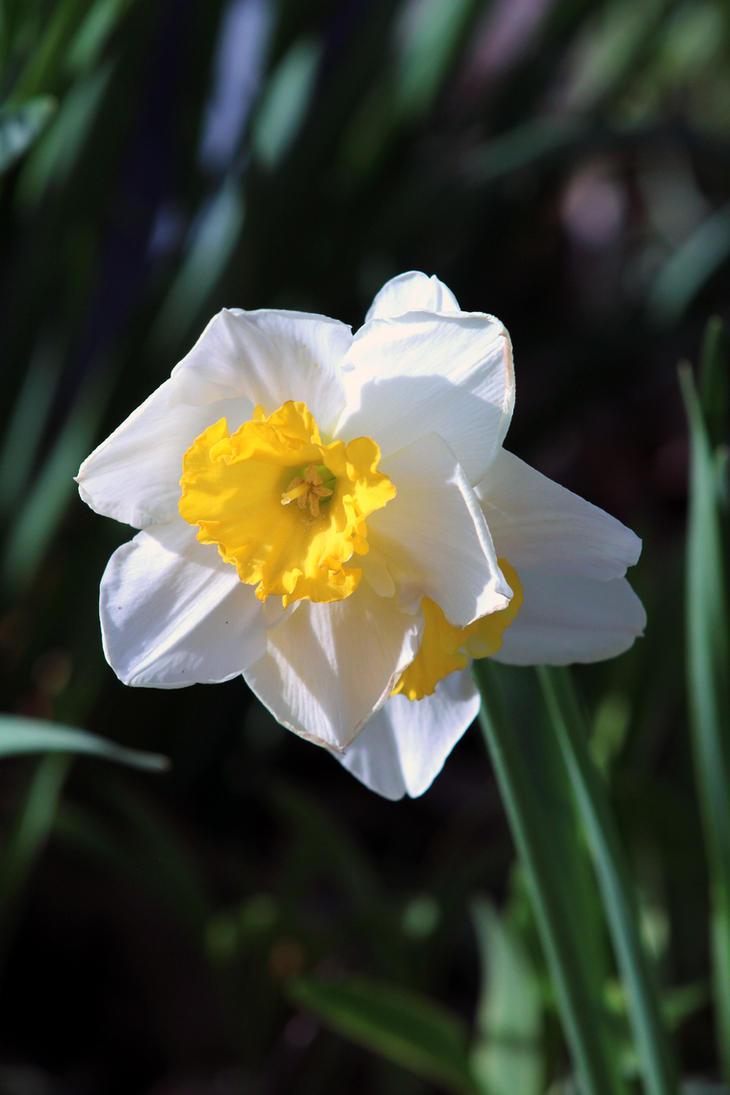 Springflower by captainkodak1