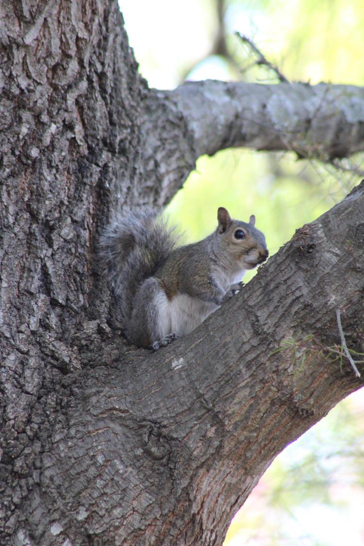 Anyone got some nuts? by captainkodak1